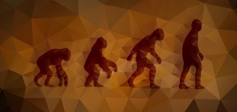 A meditation on (human) evolution